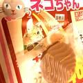 写真: ネコちゃんとロイズ ~Royce' & Cat