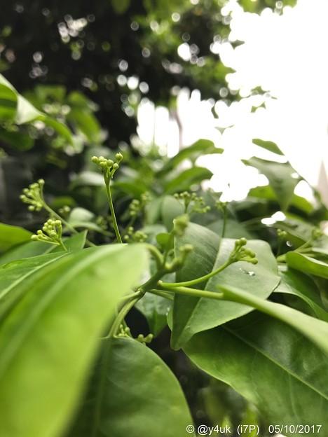 木々の若葉は強がりだから ~5月の別れ~新たな生命