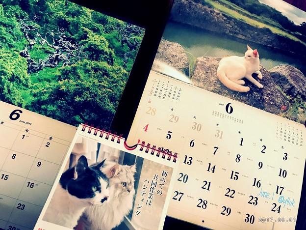 もう半年 ~水無月にゃんこに恋する6月