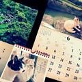 写真: もう半年 ~水無月にゃんこに恋する6月