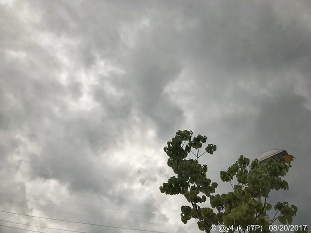 連日の蒸し暑い雲の下を会いにゆく ~緑も身も汗が止まらない濡れるTシャツ