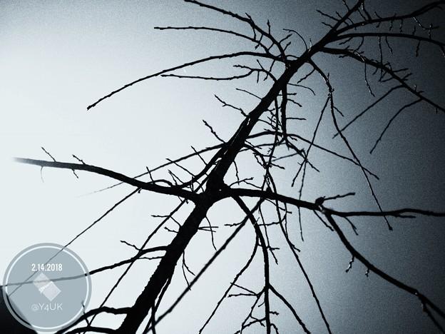bud through of Valentine's OM-D day. Rough monochrome~蕾~E-M10markII 25mmF1.8
