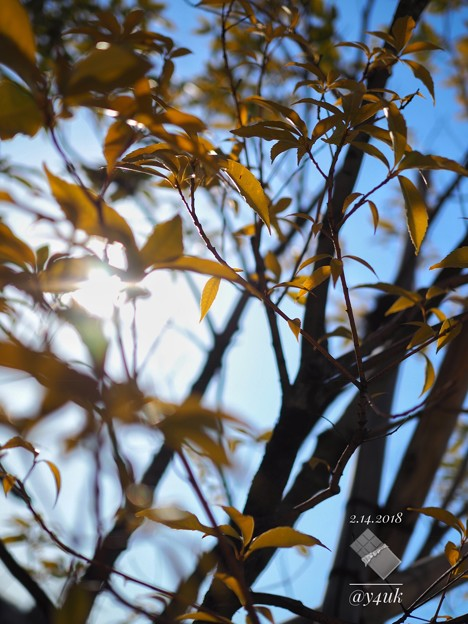 写真: leaves of Valentine's OM-D day, light in the sun~その向こうへ~E-M10markII 25mmF1.8 絞り優先
