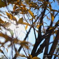 leaves of Valentine's OM-D day, light in the sun~その向こうへ~E-M10markII 25mmF1.8 絞り優先