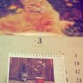 もぅ3月にゃ春が来るにゃ~岩合光昭カレンダー写真も~F2.8 80mm(12-40mmF2.8PRO)
