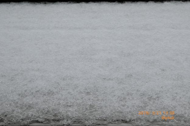 13:38 Spring Snow 春分の日を祝う銀世界の積雪(ズーム73mm)
