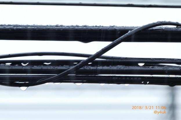 Photos: 11:06 電線に滴る雫、雨はまさかの雪へ~春分の日、積もる雪に募る想い~spring snow slow(591mmシャッター優先)