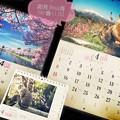 写真: @y4uk月、卯月、Start~桜、青空、にゃんこ 岩合光昭、湖、風景、春=All Love 4!