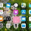 写真: Landscape iOS11.3 new update today's iPhone7Plus ~桜アップ写真を壁紙に「△」アンテナピクトに戻ったけど棒たちが丸いのがAppleらしい(o^^o)