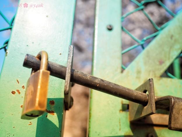 Photos: 鍵を開けてほしい、きみに会いたい桜満開 ~Locking freedom~[OM-D E-M10MarkII, 12-40mmF2.8PRO]19mm(38mm)
