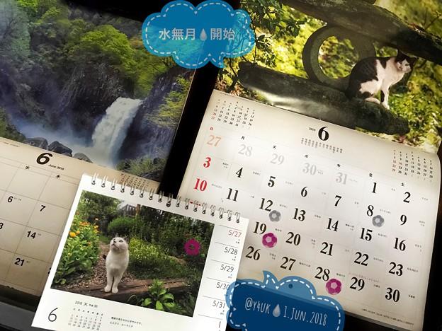 水無月開始!ロシアW杯☆梅雨の旅(=^ェ^=)にゃんこカレンダー岩合光昭「電線の鳥たちがにぎやかです」「雨が降るのを知っていたのかな」信州の滝~新緑~ダニも憂鬱に活発中~1/fの揺らぎに包まれたい
