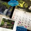 写真: 水無月開始!ロシアW杯☆梅雨の旅(=^ェ^=)にゃんこカレンダー岩合光昭「電線の鳥たちがにぎやかです」「雨が降るのを知っていたのかな」信州の滝~新緑~ダニも憂鬱に活発中~1/fの揺らぎに包まれたい