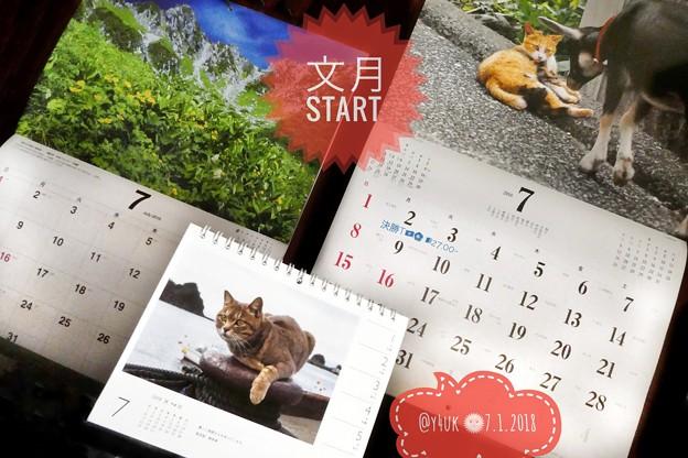 Photos: 文月ちゃんStartにゃん(°▽°)もぅ7月あっという間に半年過ぎ今年も終わりね~もう帰ってこない…あの人もあの日々も…にゃお~ん!七夕に祈る~岩合光昭カレンダー猫は写真が生きてる癒される♪信州の山も