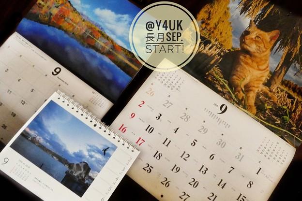 Photos: 長月Start!September Love Cats Calendar's~やはり今夏は1ヶ月ずれ8月は7月へ9月は8月へ~岩合光昭にゃんこx2&信州湖紅葉カレンダー秋オレンジ(絞り優先:TZ85)