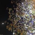 写真: 17:42Xmasライトアップ紅葉(Red&Green)にLEDホワイトイルミネーションTree☆眺めてる月☆コラボ☆寄り添う2人は写メ☆寒い夜、輝く夜、生きてる夜。クリスマスは24-25だけじゃない