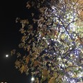 Photos: 17:42Xmasライトアップ紅葉(Red&Green)にLEDホワイトイルミネーションTree☆眺めてる月☆コラボ☆寄り添う2人は写メ☆寒い夜、輝く夜、生きてる夜。クリスマスは24-25だけじゃない