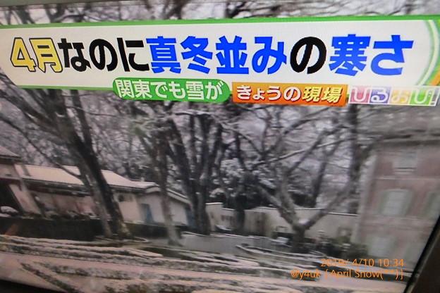 Photos: 10:34_10.4月の雪「ひるおび:4月なのに真冬並みの寒さ。関東でも雪が」April Snow Miracle~奇跡の白い天使たちが4月に降りた午前中「北海道より寒い関東」(フォト蔵また不具合中)