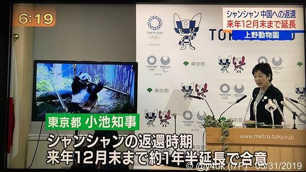 """NHK首都圏ネットワーク""""シャンシャン中国への返還、来年12月末まで延長""""「~約1年半延長で合意」(●´ω`●)小池知事たまには役立つ、裏がありそうですが、帰ったほうが成長に良いかもですが正直悶絶多幸"""