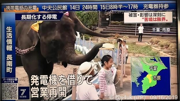 "NHKニュース7""発電機を借りて営業再開""ゾウさん麦わら帽子を被らせてくれた(^○^)」感涙・優しい・明るい話題・子が動物が笑ってると大人も元気に「停電で休業の動物園 発電機の支援受け再開 千葉市原」"