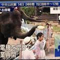 Photos: NHKニュース7「発電機を借りて営業再開」ゾウさん麦わら帽子を被らせてくれた(^○^)」感涙・優しい・明るい話題・子が動物が笑ってると大人も元気に「停電で休業の動物園 発電機の支援受け再開 千葉市原」