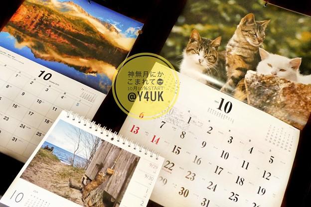 Photos: もぅ10月もぅ10%もぅXmasすぐそこ。岩合光昭にゃんこ達も秋の気配でカレンダーも販売中。長野の湖に山の紅葉。写真て素敵だ☆人猫恋しい「川に落ちた子猫を助けろ通行人らが救出劇 長崎」猫の親子愛に感涙