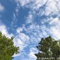 """9.20旅先その5.発売日iPhone11Proお店またぎ時の""""木々の間の空""""夏と秋が混在している!iPhoneの発色が好き!旅の途中、歩いたまま撮影の速写性気軽さ#ShotoniPhoneならでは♪"""