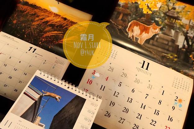 11.1霜月Start今年あと2ヶ月もぅXmas気分あがらない…オレンジの11月♪京都ねこの品の良さ、ススキの信州☆岩合光昭にゃんこカレンダー10年くらい買い続けてる来年のも購入☆売り切れ前に急ごう!