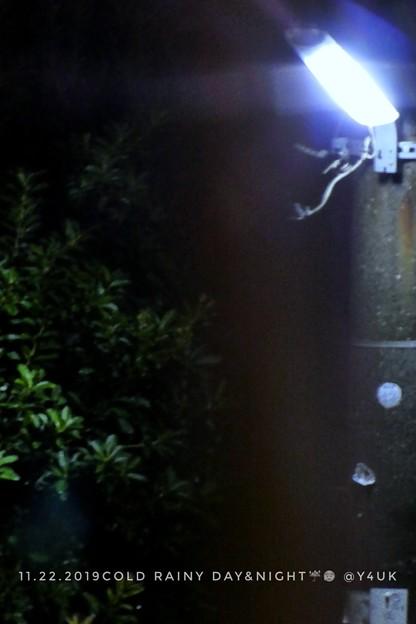 "Photos: 11.22_17:29Cold Rainy day&nights~今季1番の真冬7℃日中夜、冷たい気温と雨寒い夜にXmasJazz心地いい""いつ恋""も聴き想い出し「~泣いてしまう」1/3secTZ85"