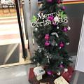 """11.18_15:29旅先その6.""""今年初のXmas Tree""""Pink or Velvet colors & Presented to the bottom~ボール色が大人ぽい◯今年1枚目のXmas"""