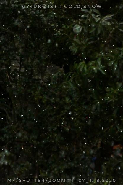 Photos: 11:07_1.18 1st 1℃old Snow Angels今冬初雪・明午前・天使・コンデジ(マニュアルフォーカスMF,シャッター優先1/2000,zoom750mm,ISO800:TZ85)本気