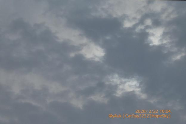 Photos: 10:04_2.22.2020CatDay,Hope.#猫の日am曇り空☆空前絶後のぉ!にゃんにゃんにゃんにゃんにゃーんの日☆ねこ様は世界中平和な存在に感謝☆(120mm/絞り優先F5.1:TZ85)