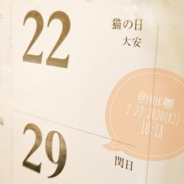 Photos: 10:18_2.22.2020#猫の日 #大安~2並びが5つ(=^ェ^=)一生に一度の5ねこ様に感謝の日☆岩合光昭カレンダーには毎年必ず記述されてる全国民絶対的行事、和む癒し平和の神(接写:TZ85)