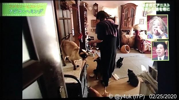 """NHKファミリー・ヒストリー#フジコ・ヘミング猫好きで何匹も保護。ピアノ音色にみんな寝る""""魂、心、想い、感性""""が伝わるから昔から好きで気づけば猫も好きな人「ピアノの音色と共に浮かび上がる、壮絶な歳月」"""