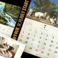 """Photos: もぅ7月もぅ半年""""文月July Start""""今月からは良い事、平和なりたいけど家が人が腐る一方でも第2波の予兆…レジ袋有料…。岩合光昭にゃんこお友達いっぱい(猫いるとこ平和で癒される)&滝が涼しげ箱根"""