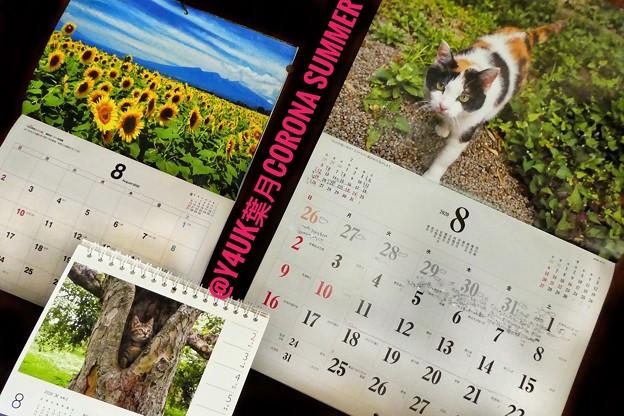 もぅ8月CORONA SUMMER Start~岩合光昭にゃんこx2&養命酒カレンダー!三毛猫の目線に悶絶!コロナのせいで8ヶ月あっという間8.1梅雨明け同時急に酷暑の連日(~_~;)慣れない暑さ危険