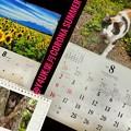 もぅ8月CORONA SUMMER Start~岩合光昭にゃんこx2&養命酒カレンダー!三毛猫目線に悶絶&優しい人の巡り!コロナ8ヶ月あっという間8.1梅雨明け同時急に酷暑の連日(~_~;)救急車暴走