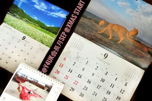 "Photos: もぅ9月1日""長月September Start""Xmasもスタート☆岩合光昭にゃんこx2&信州そば畑山秋空カレンダー!毎月恒例☆岩合ねこは最高生きる!可愛い岩合ツイートも可愛い「戦後最も暑かった8月"