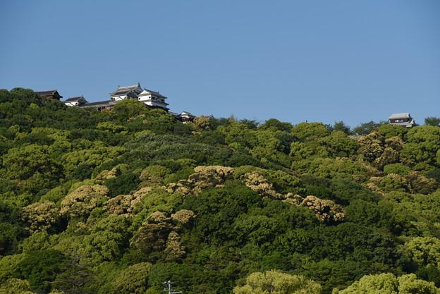 写真: 松山城を望む