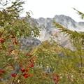 ナナカマドと立山