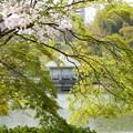 Photos: さくらと新緑と浮御堂