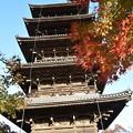 紅葉と五重塔
