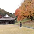 国宝と櫂の木紅葉
