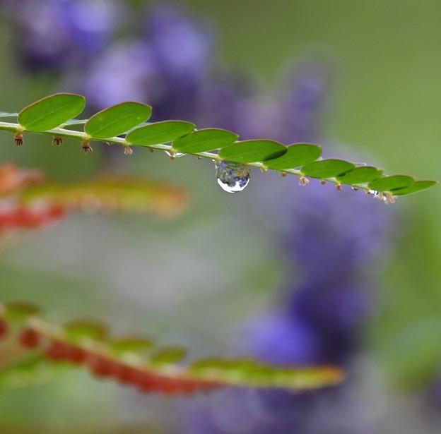 雨上がりの秋の野草