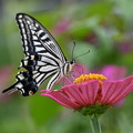 Photos: 花とチョウ