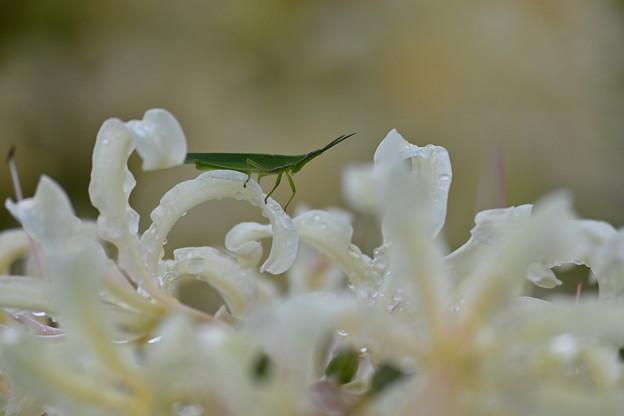 Photos: 白と緑