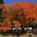 Photos: 櫂の木