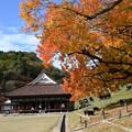 Photos: 櫂の木と講堂