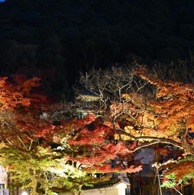 Photos: 永観堂のライトアップ