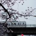 写真: 隅田川櫻花與山手線