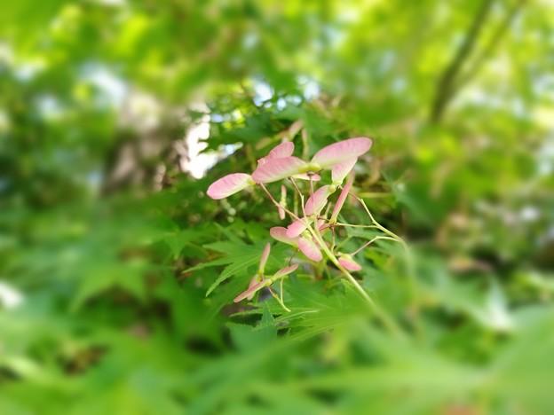 写真: 竹トンボ